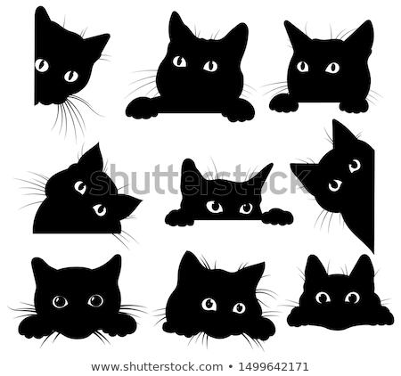gato · preto · cara · conjunto · faces · isolado · branco - foto stock © kup1984