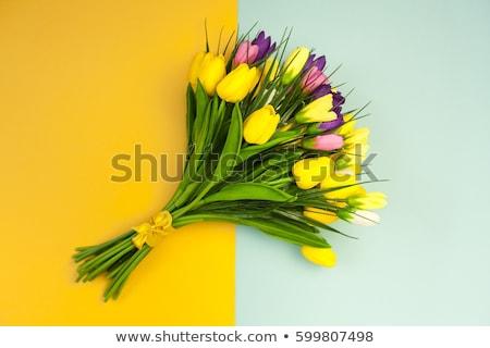 Spring gift flowers  Stock photo © unikpix