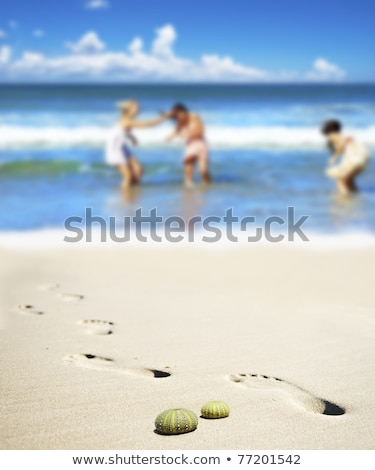 sea urchin shells on the beach with three young women in the background stock photo © tish1