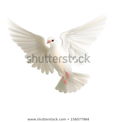 Piccione isolato colomba bianco città natura Foto d'archivio © MaryValery
