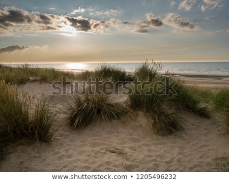 Duna scenario settentrionale mare Foto d'archivio © prill