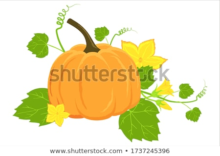 Oranje najaar pompoenen groene vector graphics Stockfoto © Pravokrugulnik