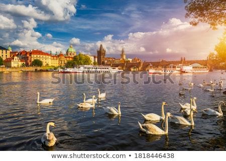 Swan near Charles Bridge Stock photo © Givaga