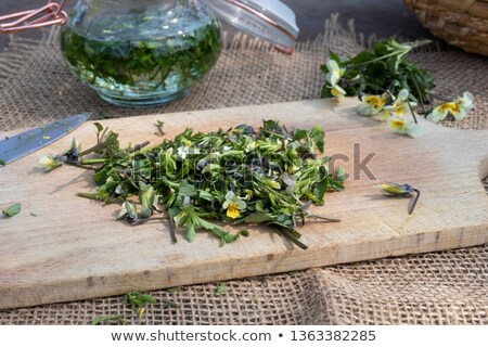 Cutting fresh Viola arvensis flowers to prepare tincture Stock photo © madeleine_steinbach