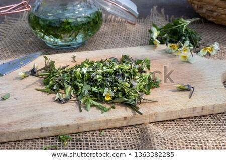 свежие · цветы · домашний · цветок · лист - Сток-фото © madeleine_steinbach