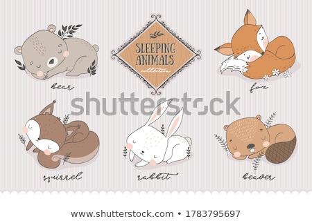 teddybeer · schets · icon · vector · geïsoleerd - stockfoto © vetrakori