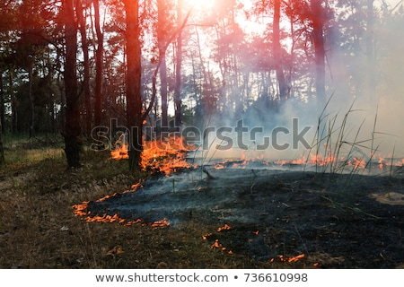 burned forest nature pollution destruction Stock photo © romvo