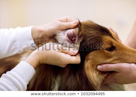 uśmiechnięty · lekarz · weterynarii · cute · psa · medycznych - zdjęcia stock © kzenon