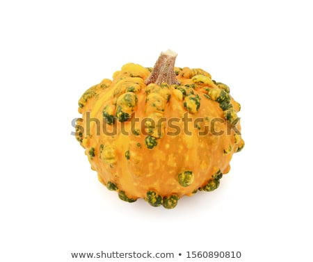 Lumpy, warted ornamental gourd with orange and green markings Stock photo © sarahdoow