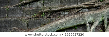 Banner of Tree root and stone with moss background. Stock photo © Illia