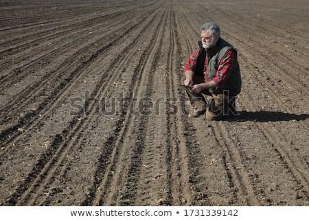 Farmer in field after sowing analyze land Stock photo © simazoran