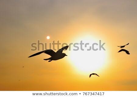 group of flying swans stock photo © mayboro