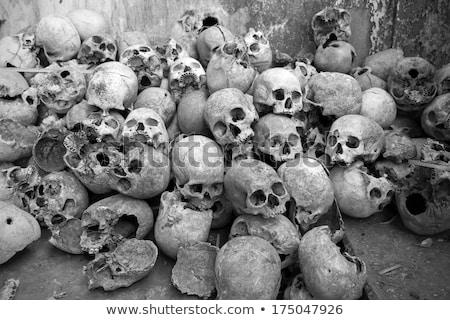 Niebezpieczeństwo czaszki mózgu kolekcja medycznych ciało Zdjęcia stock © adrian_n