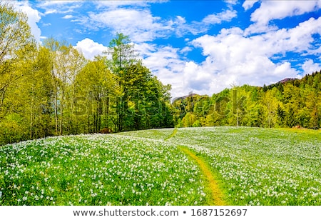 Meadow Stock photo © Spectral
