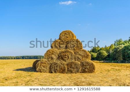 Straw ricks on the field Stock photo © jakatics