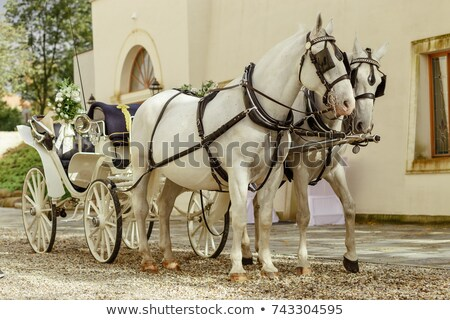 Stock photo: Horses and carriage, Vienna