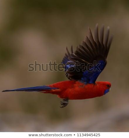 Pappagallo volo rendering 3d uccello tropicali Foto d'archivio © AlienCat