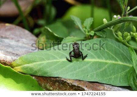 Giovani rana bella seduta mano umana verde Foto d'archivio © hraska