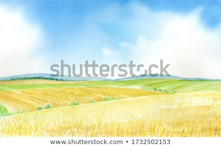 yellow field stock photo © leonardi