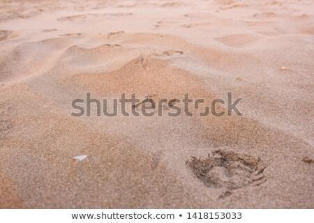 pegadas · areia · praia · textura · oceano · assinar - foto stock © alekleks
