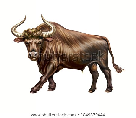 Aurochs Stock photo © sibrikov