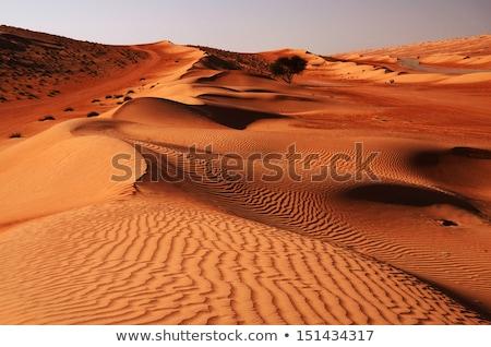 закат Оман Flying песчаная дюна пустыне Сток-фото © w20er