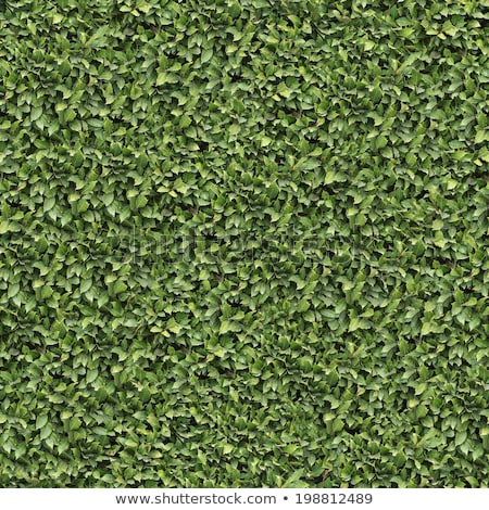 Laurel Bush. Seamless Tileable Texture. Stock photo © tashatuvango