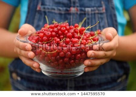 fresco · vermelho · groselha · água · fruto - foto stock © simply