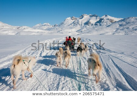Dog sledging trip in cold snowy winter Stock photo © mady70