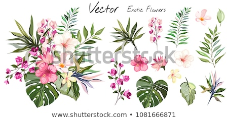 A pink flower with leaves Stock photo © bluering