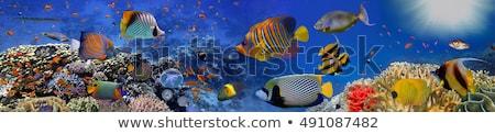 коралловый · риф · морем · иллюстрация · фон · искусства · синий - Сток-фото © bluering