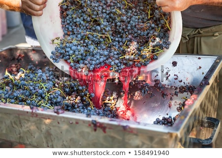 Container of freshly picked grapes Stock photo © njnightsky