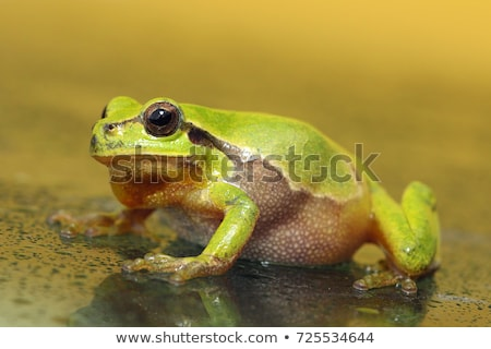 cute green tree frog full length image Stock photo © taviphoto