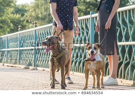 Emberek kutya park kutyák illusztráció égbolt Stock fotó © bluering