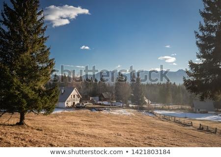Slovenya çam orman dağ ahşap doğa Stok fotoğraf © boggy