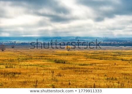 A lowland landscape background Stock photo © bluering