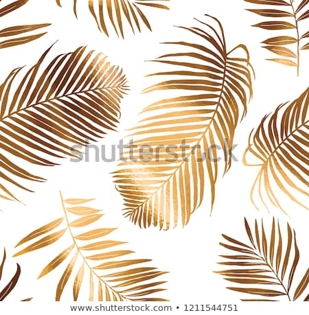 Natural composition from a branch of a fern with reflection of shadows on a blue background with spa Stock photo © artjazz