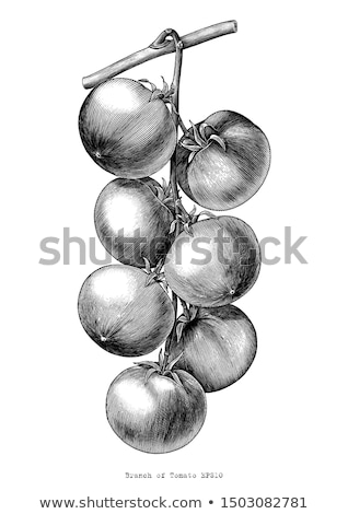 scratchboard style ink drawings of fruit and vegetables stock photo © cidepix