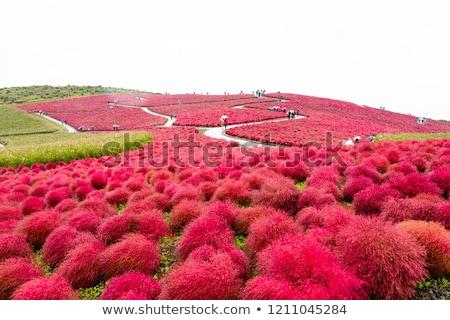 Japonia Bush Hill krajobraz parku Zdjęcia stock © vichie81