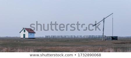 Iyi çoban Macaristan tipik park Stok fotoğraf © artush
