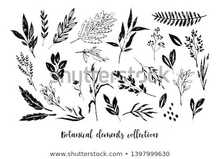 Сток-фото: набор · рисованной · листьев · зеленый · лист · лист