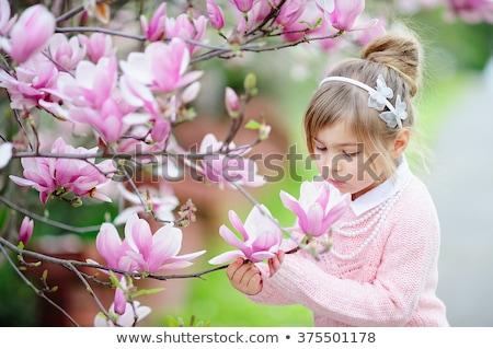 Mały różowy magnolia kwiaty flora projektu Zdjęcia stock © foxbiz