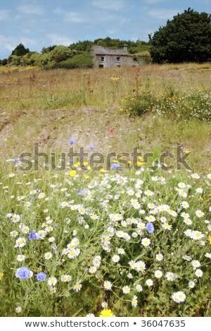 bitki · köy · batı · sahil · İrlanda · yaz - stok fotoğraf © morrbyte