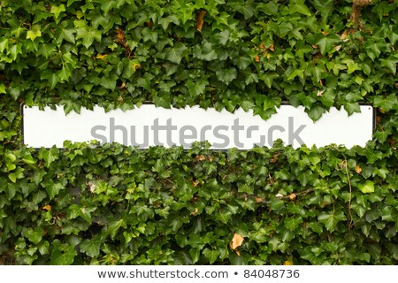 Blank English street sign in a green leaf hedge. Stock photo © latent