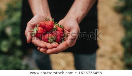 main · montrent · fraise · récolte · garçon - photo stock © ampyang