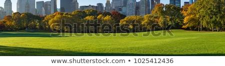 早い 秋 セントラル·パーク ニューヨーク 紅葉 葉 ストックフォト © 33ft