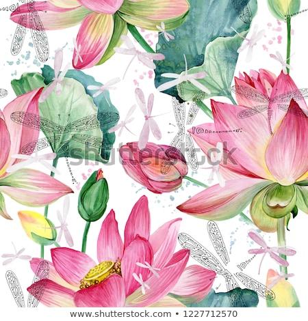 Libélula rosa lótus verde topo flor Foto stock © nuttakit