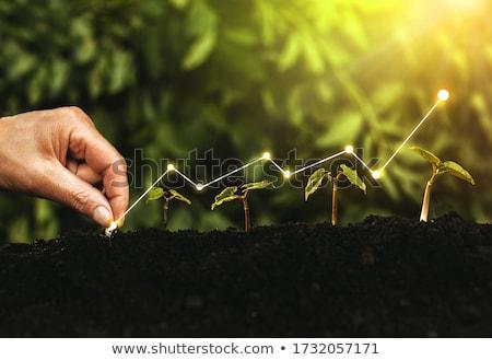金融 成長 成功 ビジネス ベスト 投資 ストックフォト © Lightsource
