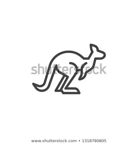 Icon kangoeroe Stockfoto © zzve