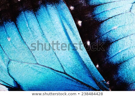 káprázatos · pillangó · fotó · gyönyörű · színes · szárnyak - stock fotó © hofmeester